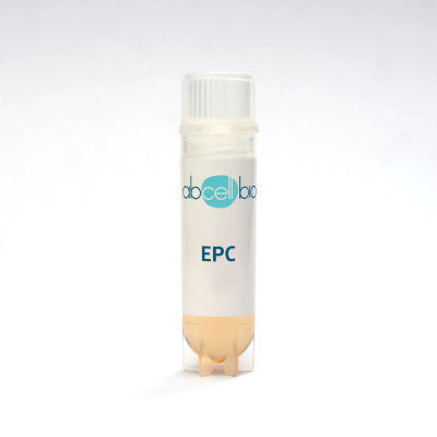 Human Endothelial Progenitor Cells (EPC)